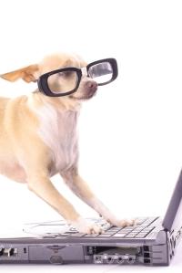 dog glasses laptop