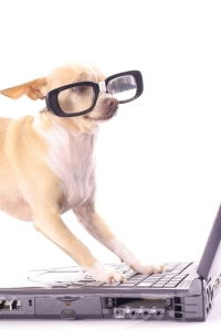 dog glasses laptop
